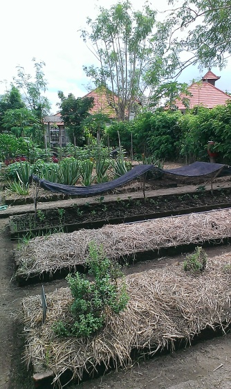 Rows of garden beds. I think they are less aesthetically pleasing than the mandala beds.
