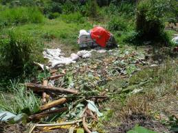 This might seem like a mess and it actually is, except that it is also a big compost pile that we created. We layered the compost pile with the chopped surrounding tall grass, waste food from factories, and chopped banana trees.