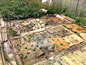 Cardboard Mulch
