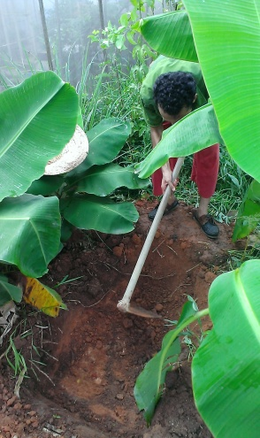 Digging Banana Circle