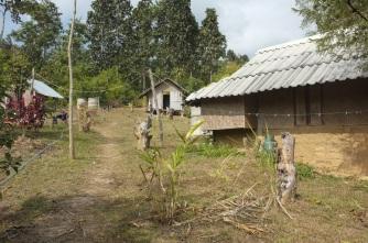 Work-in-progress fruit forest around the sleeping huts