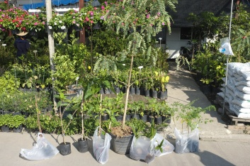 Agati (sesbania grandiflora), moringa, coconut, jujube, and more.