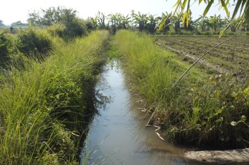 Planting vetiver on the sides of the river keeps the soil intact.