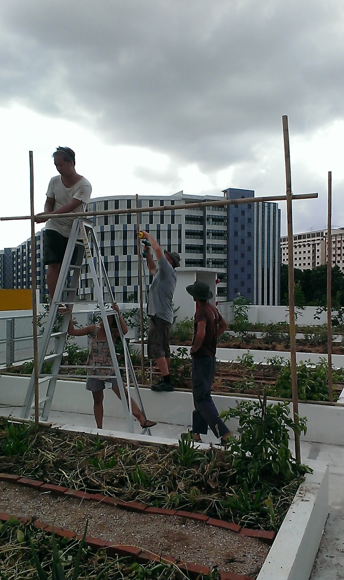Building the bamboo trellis