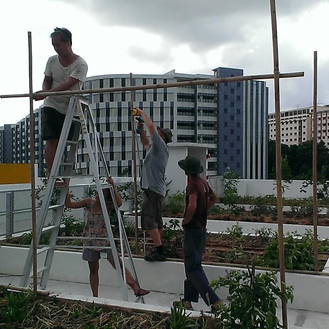 Building the bamboo trellis