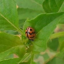 Ladybird!