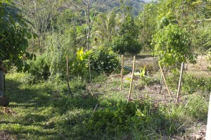 The original kitchen garden, with herbs hidden all over. The bamboo sticks act as markers.
