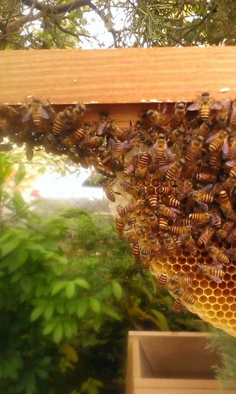 Spot the queen bee!