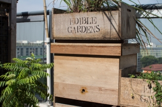 Our first bee colony at our rooftop garden. I put some plants on top to give it a green roof!