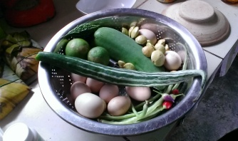 Eggs, snake gourd, bittergourd, green papaya, long beans, chillis, lime...