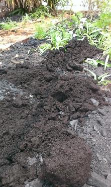 Biochar and compost.