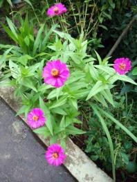 Flowers for predators