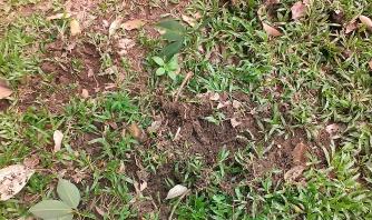 Seedlings growing in upturned soil.