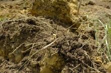 Decent soil...