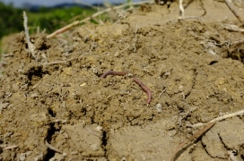 Even found an earthworm, a sign of fertility.