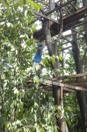 Wira climbing up the tree and frame with such ease.