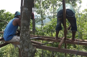 Working in the tree canopy.