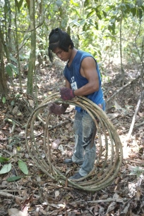 Wira tying the rolled vines.
