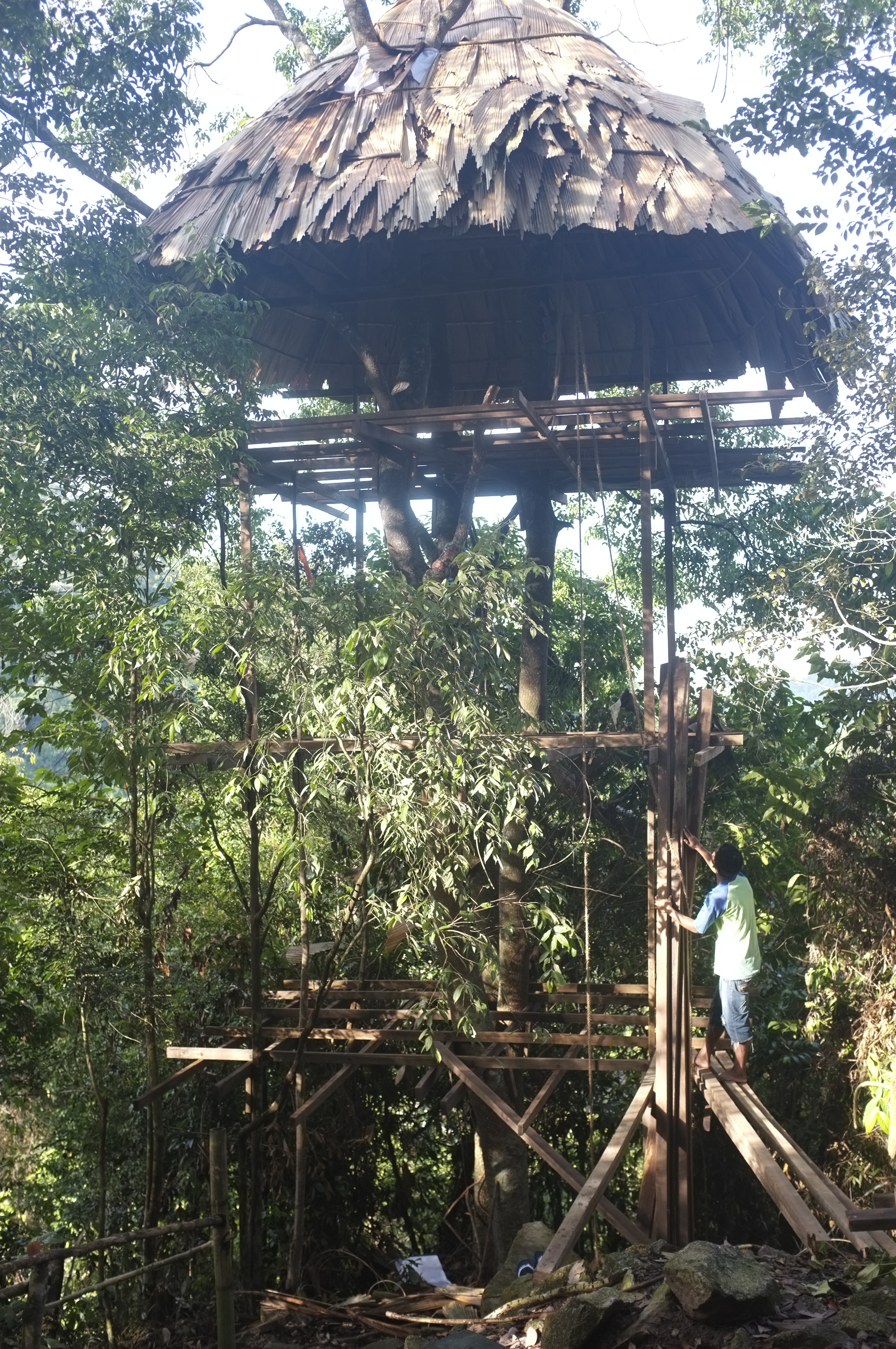 Building A Treehouse In The Rainforest Into The Ulu