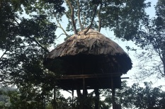 The completed roof, with many trees sticking out of it!
