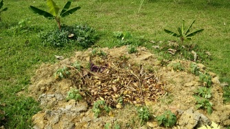 Covering the food waste with dried leaves.