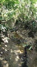 A stream flowing into the mangrove from Ricky's land. The water looks a little orange though.
