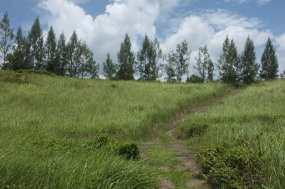 View from the front, where the building will eventually be. Casuraina planted on the ridge line.