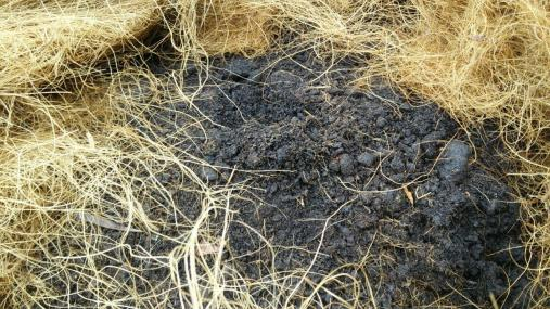 Compost from oil palm waste underneath the cocofibre mulch.