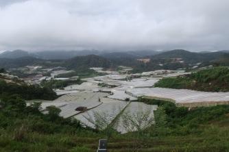 A sea of plastic. Source: http://dandlwandering10.blogspot.com/2017/08/from-cameron-highlands-to-kuala-kangsar_12.html