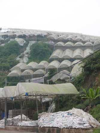 Polytunnels right up the steep slope. Source: https://nickswanderings.com/2015/08/24/cameron-highlands-poly-tunnels/