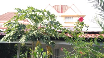 Solar panels, rainwater gutters, papayas and hibiscus