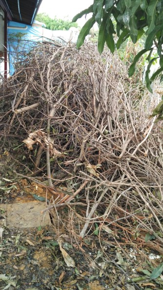 Stems, twigs and wood pieces from the prunings